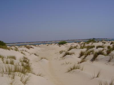 20070807212728-playa-de-lcampo-soto-playa-castillo-cadiz-5.jpg